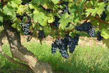 Croatia - Gastronomy and enology