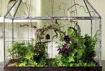 Terrarium, Miniature Garden