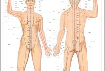 Body Points
