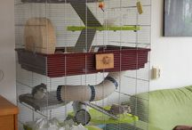 Pet Cage, Accessories and Toys / Rats, Ferret,  Chinchilla, hamster and more.