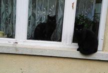 My Insta photos #macska content  #dolgokamiketszeretek #cats #catsinsta #blackcat