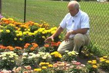 Gardening Videos / Gardening video how-to's
