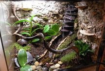 Leopard gecko tank