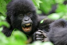 Uganda Safaris / All Packages of Uganda Tours and Uganda Safaris have been put here.From gorilla tours to wildlife trips in the parks,birdwatching,cultural visits,water rafting and launch cruises.Visit - http://www.travelhemispheres.com/uganda-tours.html