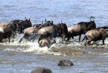 Tourism and Wildlife