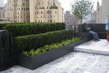Roof garden / Design