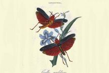The insects of China, India and New Holland from Edward Donovan