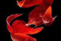 Akvaariounelmia