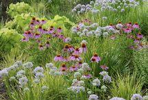 more flowers / Garden