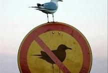 La la law...