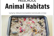 Tiere Preschool