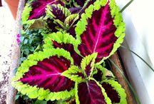 Ma jardin / Beautiful plants