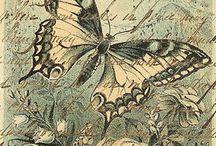 imagenes vintage de mariposas