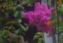 Flores pelo caminho II