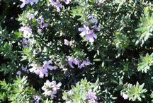 Slope plants