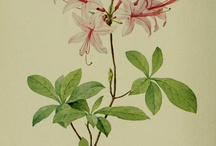 Botanical book