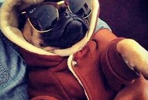 For pugs eyes only / Pugs