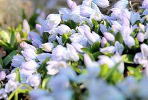 My spring photos / É a dança da natureza que, em ritmo festeiro, transforma-se em aurora.