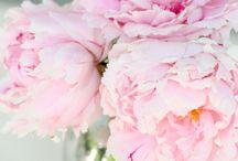 Flowers / by Brandy Murphy