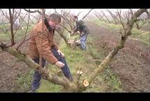 Enten op bestaande fruitbomen
