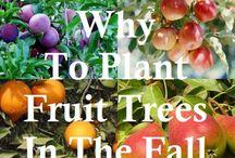 Garden LOVE! - Trees & Fruit