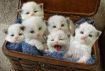 Cat Pregnancy & Birth