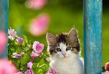 ferestre cu pisici