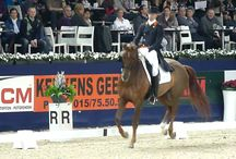Dressage / by Jacquelyn Harlow