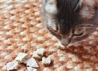 Biscuits pour chat
