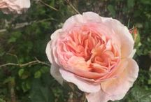 Les fleurs sur MadeInPotager / On trouve aussi des fleurs, des boutures, des bouquets...