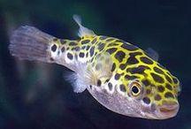 sötvatten fisk, växter och djur