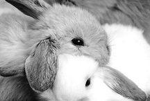 { lapins / rabbits }