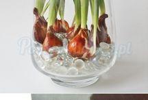 bulbs in a vase
