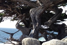 California Coast / Eureka to Oregon; San Francisco Bay Area to Marina Del Rey; Long Beach to Capistrano Beach; Capistrano Beach to San Deigo    / by visual chick