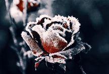 * ISM. Winter.