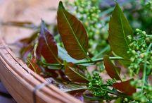 Ayurveda Herbals and spices - Gyógynövények és fűszerek / Fűszerek, gyógynövények, olajok, a természet csodái és az Ayurvéda kertje.
