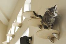 - Cats -
