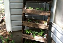 veggie and herb garden
