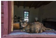 Colonial Kitties / by Colonial Williamsburg