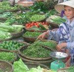 Vietnam / Asia Pacific Island Escapes