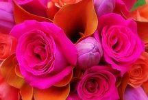 Vibrant Colors  / **{tingle the senses}**