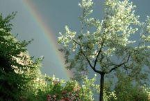 rainbow / by Miho