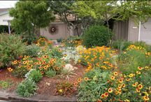 Xeriscaping project / Ripping up the sod in my backyard and using only drought resistant native Texas plants.   / by Kathryn Lorusso