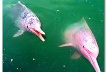 delfines rosas