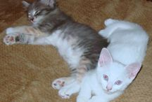 Happy Cats - from the Hepper Blog / Posts from our Hepper Blog