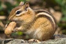I LOVE Animals/Wildlife!! / by Donna Renkel