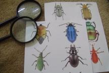 Bugs! / by Deb Hopkins