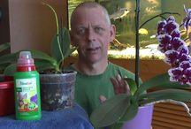Ochideen Tips & Pflege