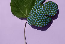 Herbier grapgique