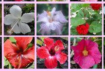Bytové kvety